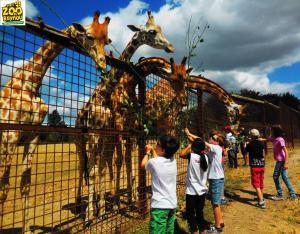 Excursion en famille Zoo du Reynou proche Colonge proche Collonges la Rouge